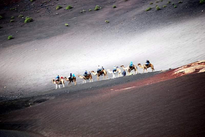 Camels Timanfaya