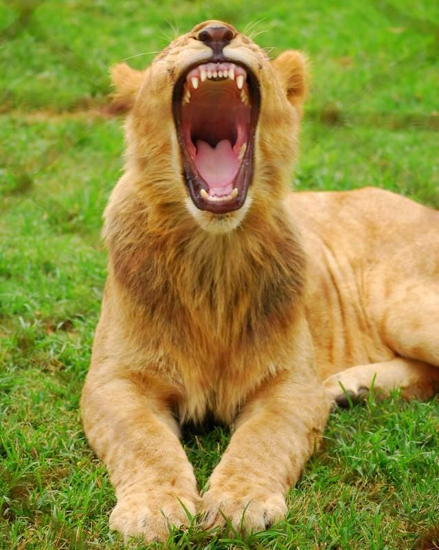 Johannesburg Lion Park