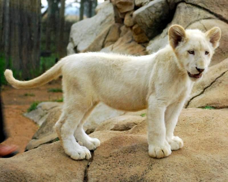 Lion Park Johannesburg review