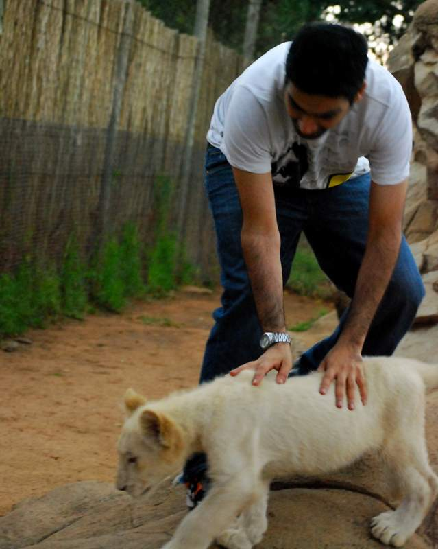 Lion Park Johannesburg review