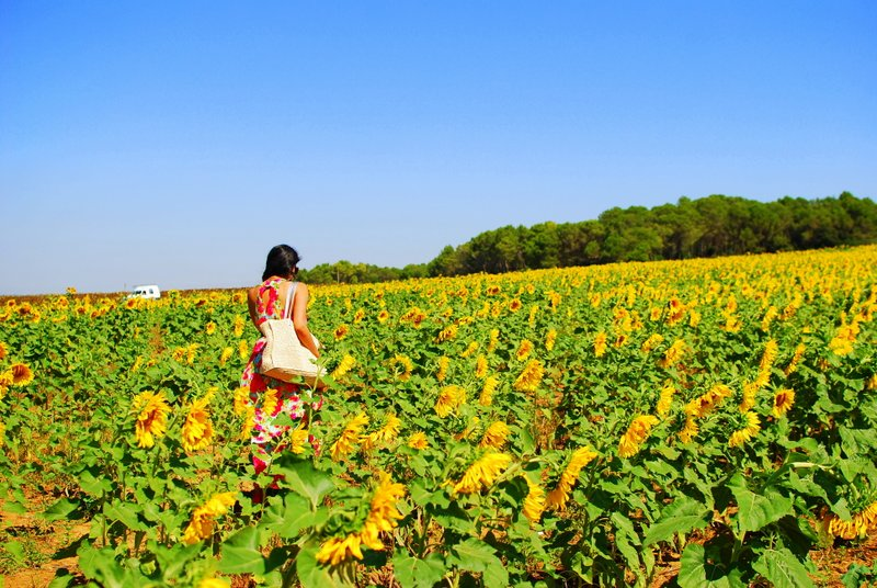 Road trip Spain - sunflower fields