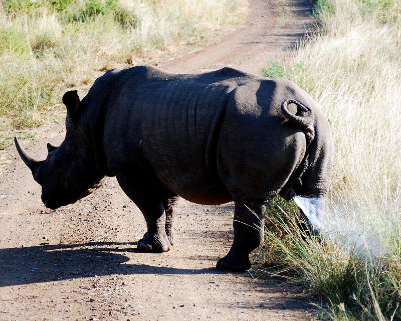 Safari at Hluhluwe Imfolozi National Park. Cheap offbeat safari 5