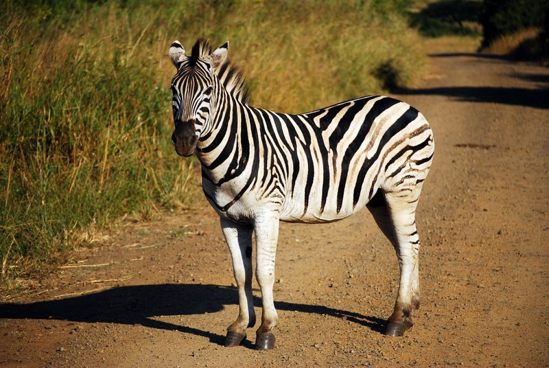 Safari at Hluhluwe Imfolozi National Park. Cheap offbeat safari 6