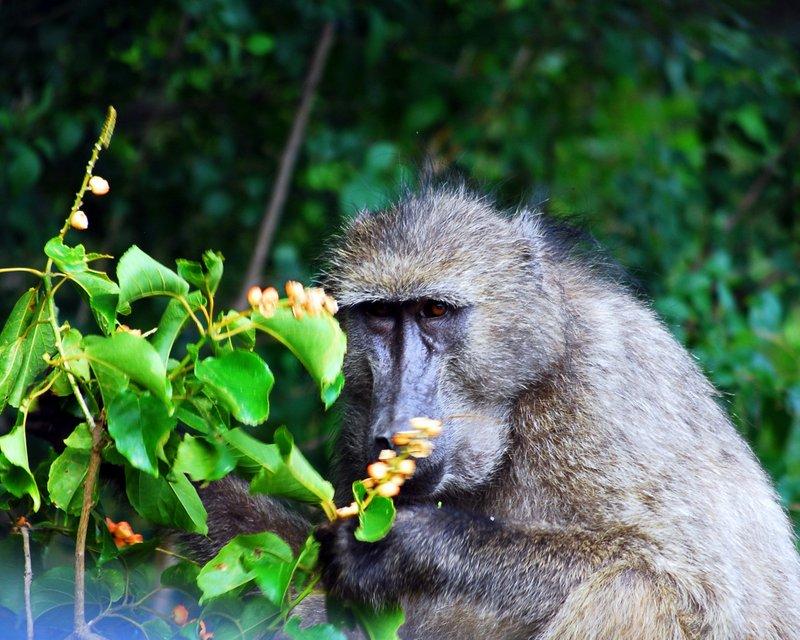 Safari at Hluhluwe Imfolozi National Park