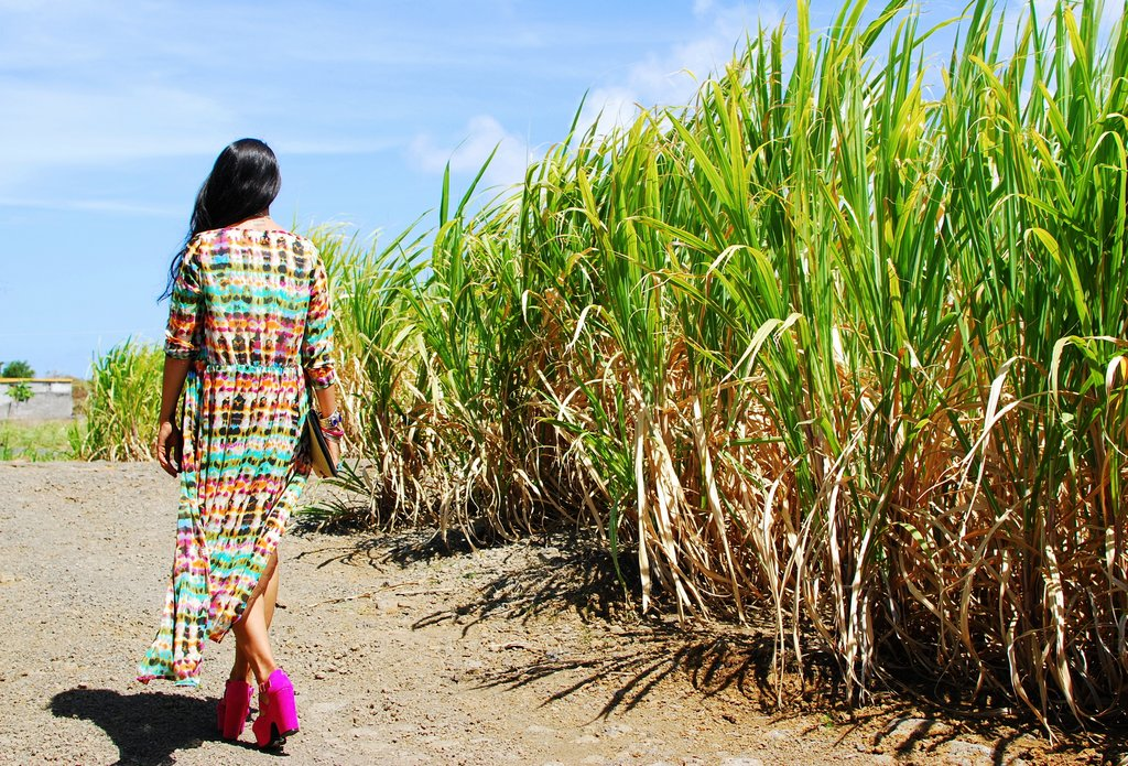 things to do in mauritius sugarcane