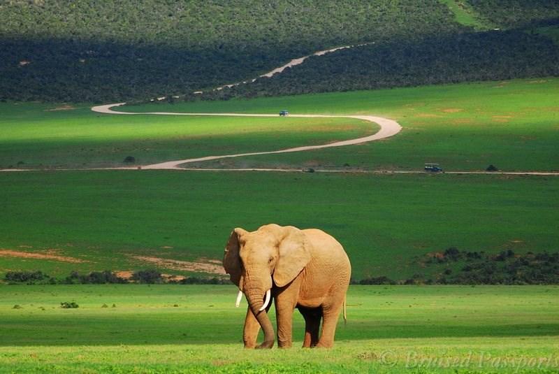 Addo National Park - Elephant