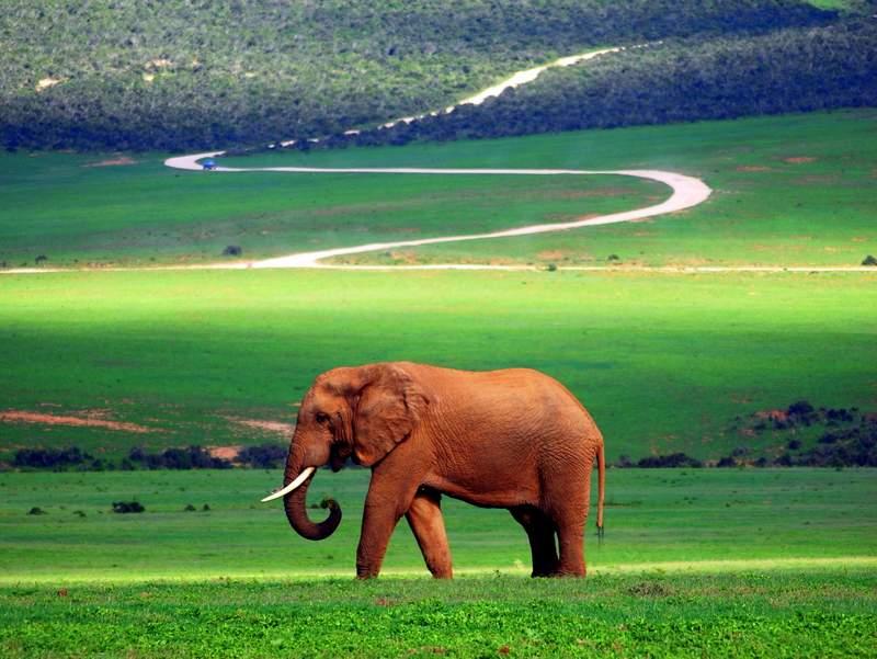 Self Drive Safari at Addo National Park 4