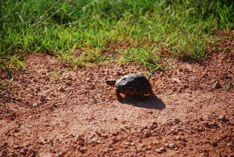 Self Drive Safari at Addo National Park animals