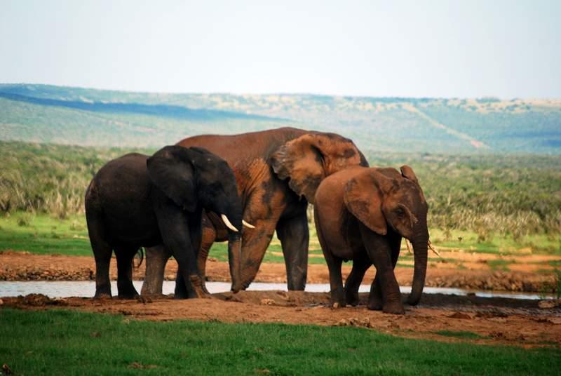 Self Drive Safari at Addo National Park