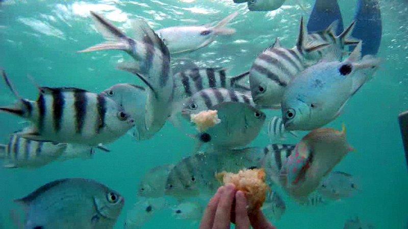 undersea walk mauritius - Feeding Fish