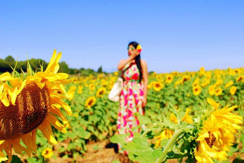 Spain Road Trip Sunflower Fields