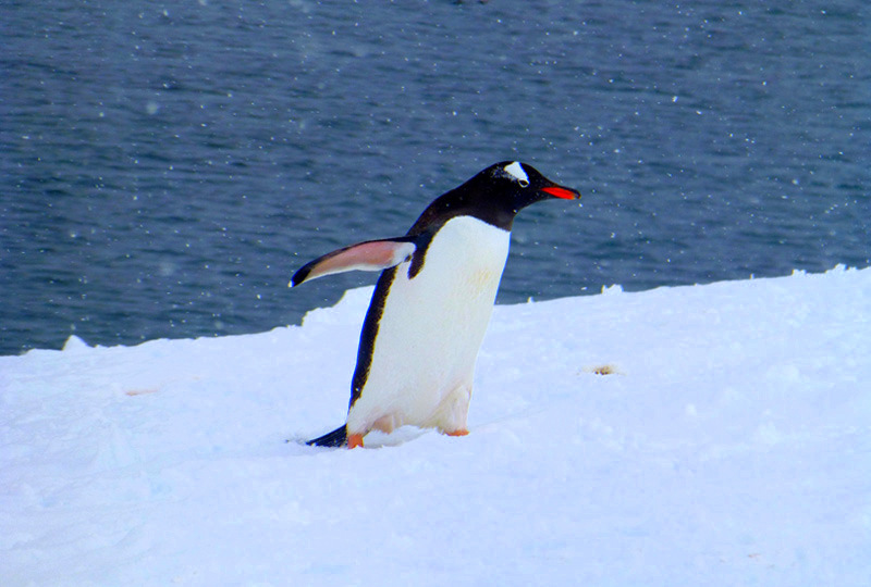 Penguin antarctica things to do