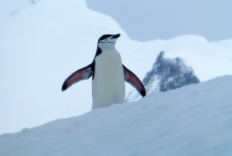 Are you tempted to book a trip to Antarctica yet? :)