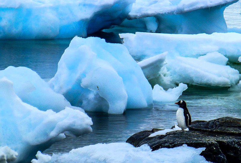 penguin things to do in Antarctica