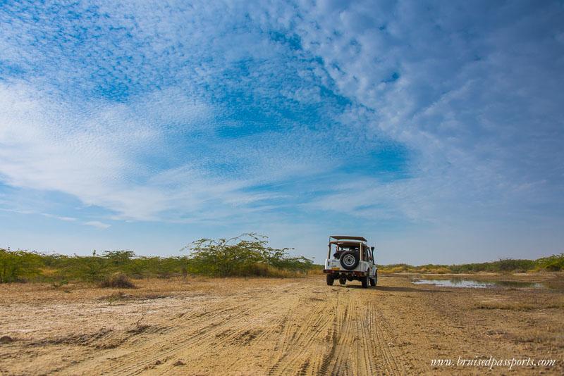 Desert Safari things to do in jodhpur