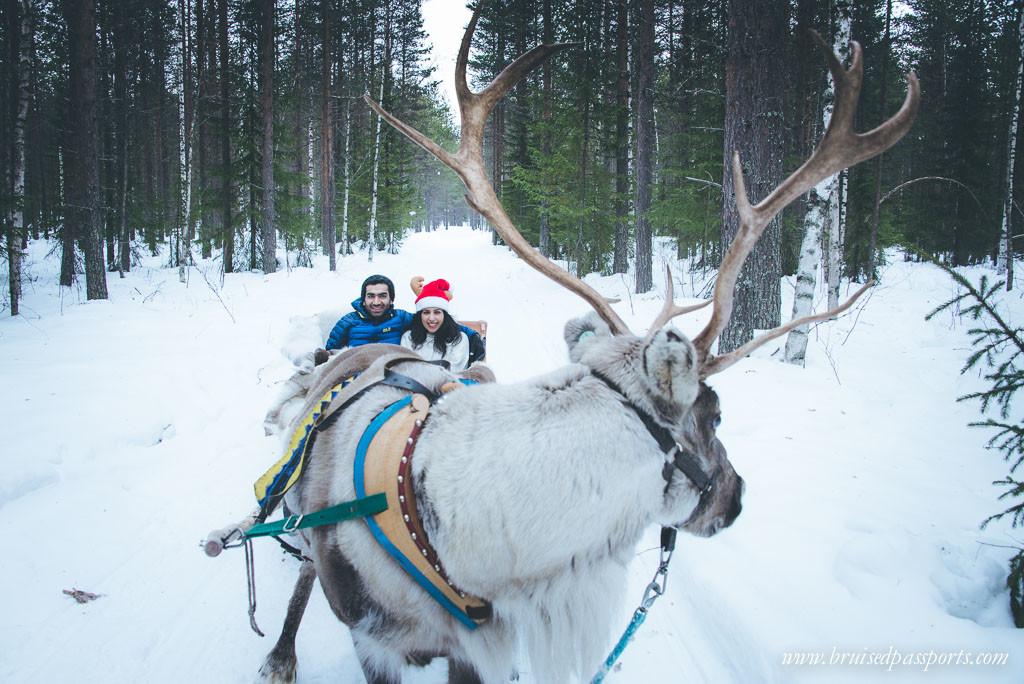 Reindeer sleigh Rovaniemi