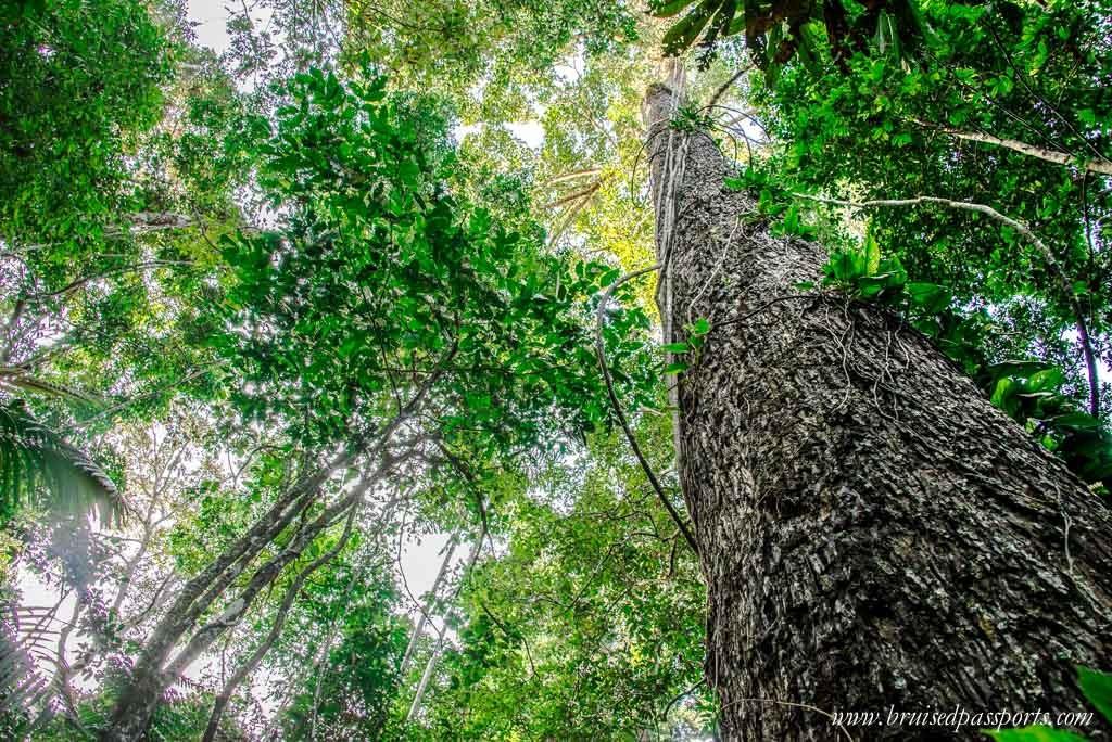 Peruvian Amazon Rainforest Expeditions Villa Review-11