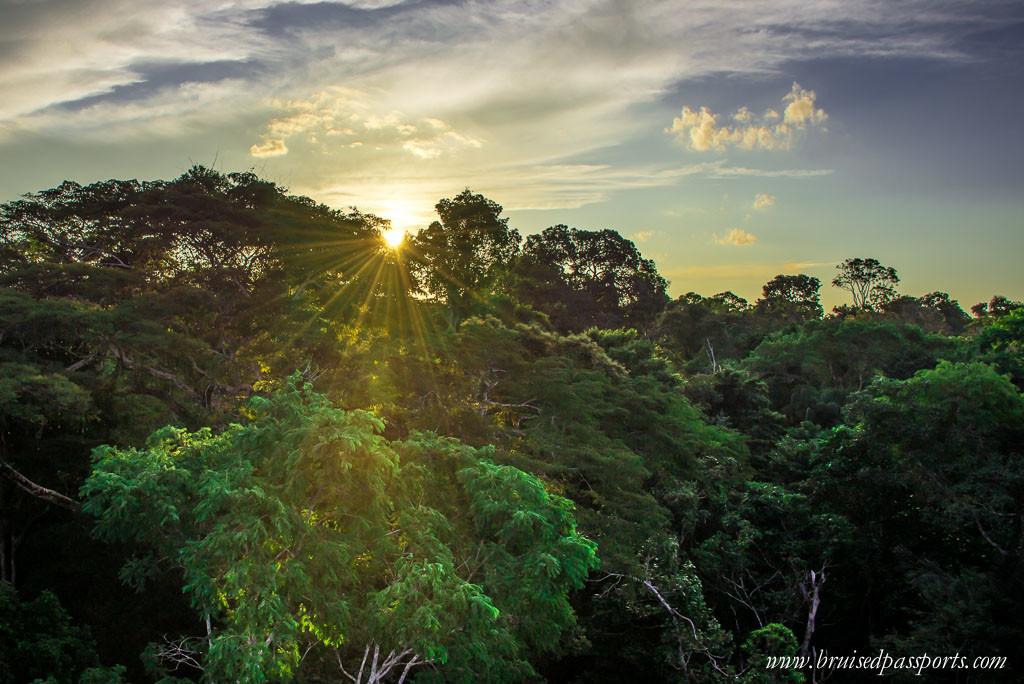 Tambopata Natural Reserve Canopy