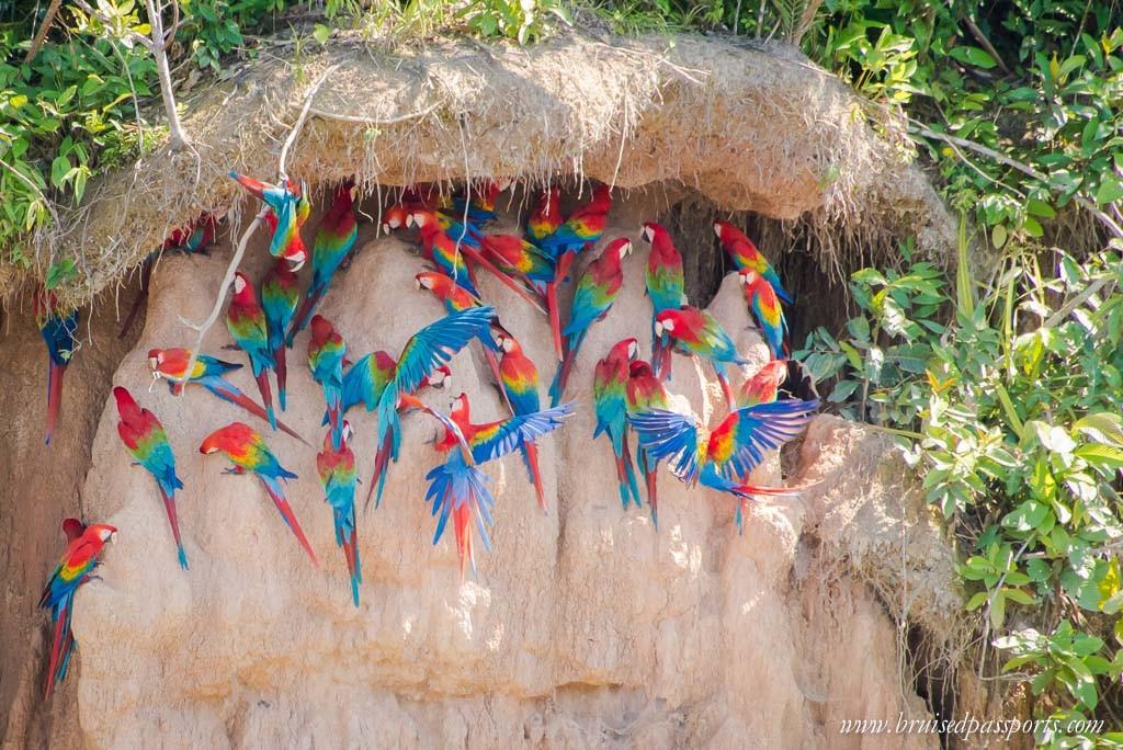 Peruvian Amazon Rainforest Expeditions Villa Review-6