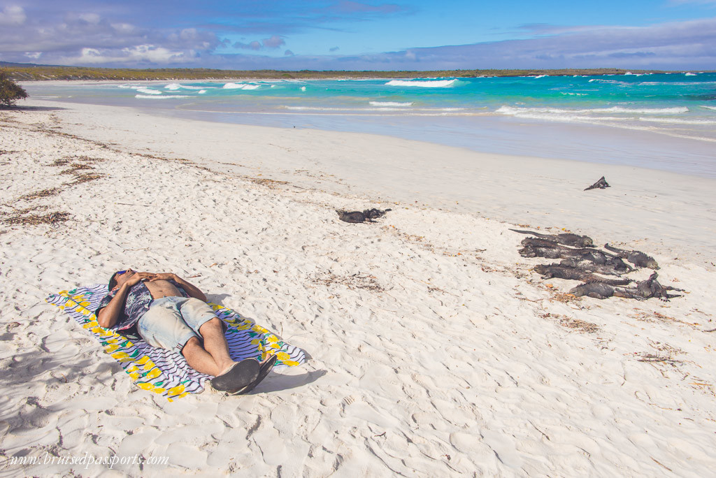 Boy sunbathing on tortuga bay beach with iguanas