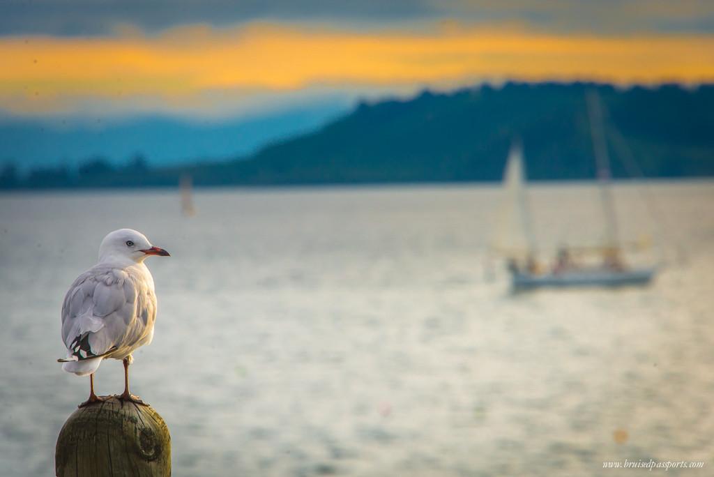 New Zealand Road Trip Itinerary Lake Taupo