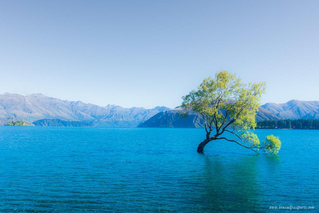 New Zealand road trip itinerary lake wanaka