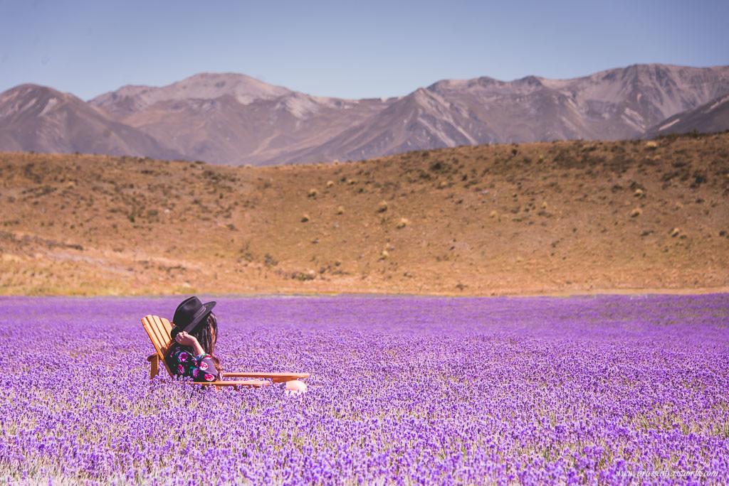 New Zealand Road trip travel fashion girl in lavender farm