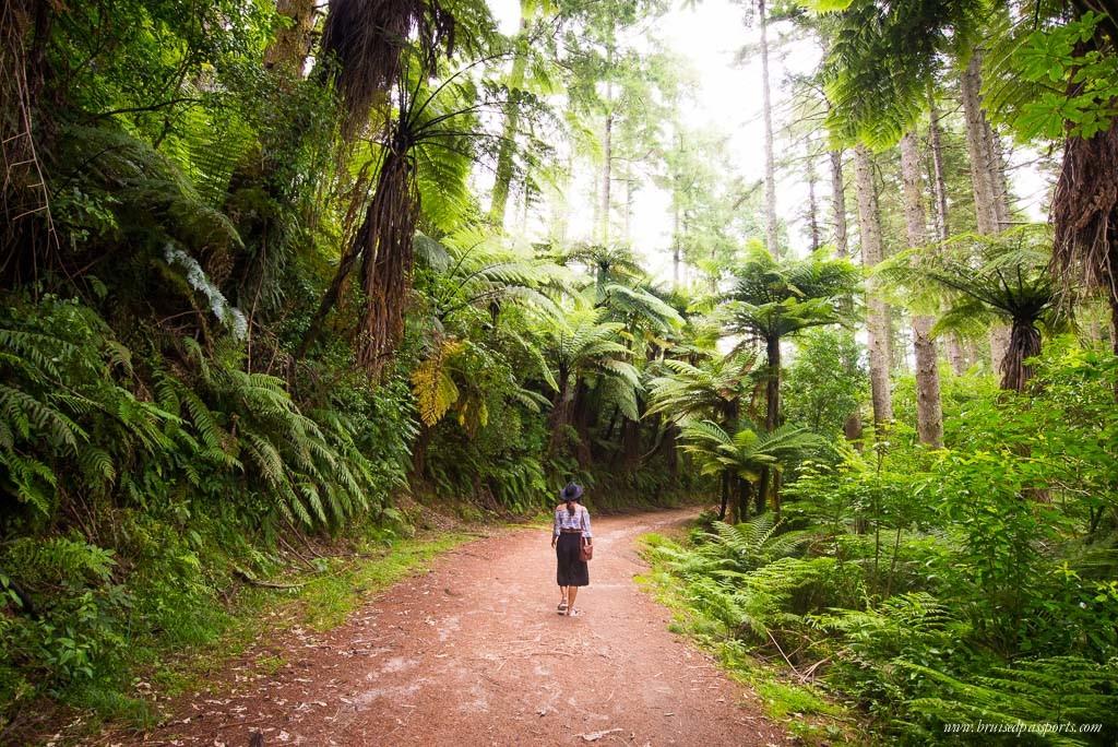 New Zealand Road Trip Itinerary Rotorua