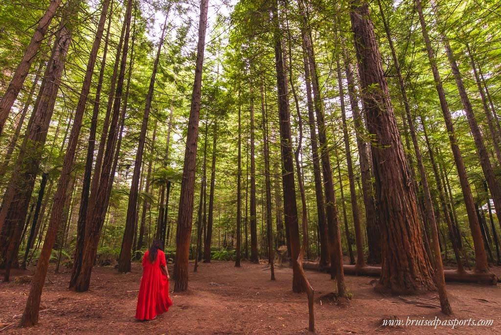 New Zealand Road Trip itinerary redwood forest