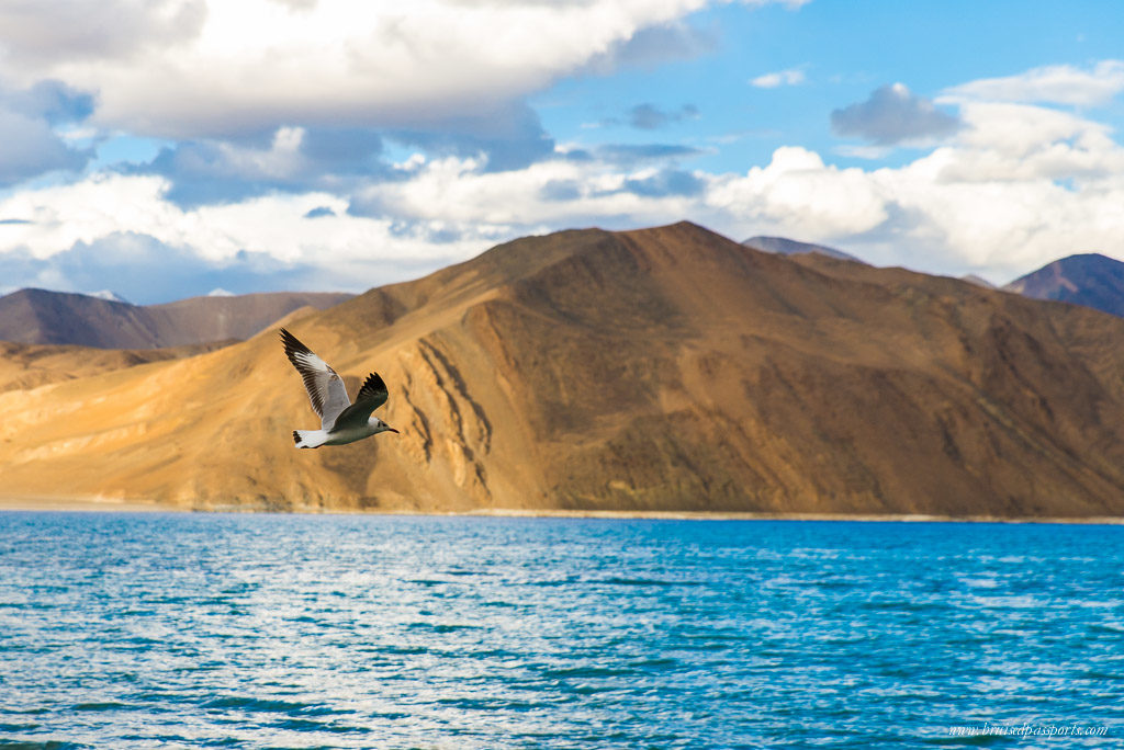 Pangong Lake on road trip of Ladakh
