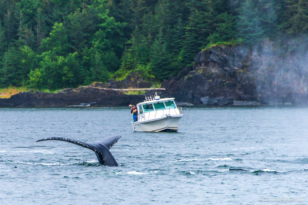 Huge humpback whales just inches away from boats in Alaska