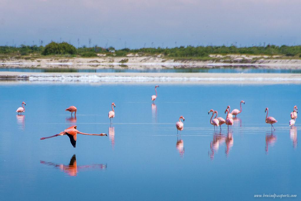 Pink Flamingoes at Las Coloradas Rio Lagartos Mexico