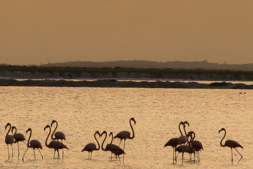 Flamingoes at sunset in Las Coloradas Yucatan