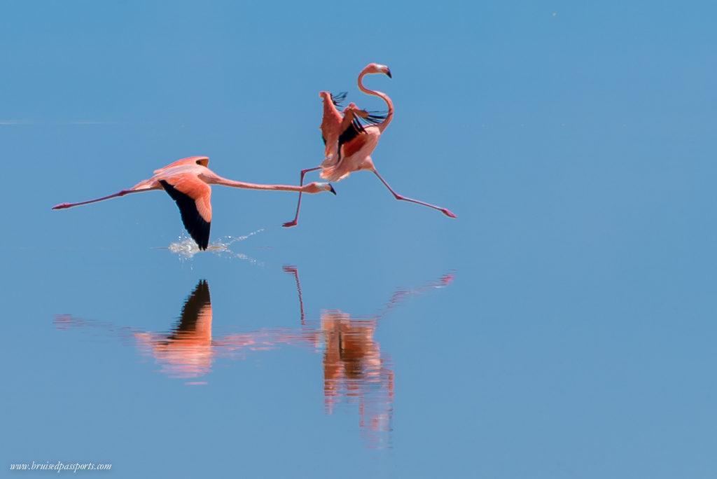 Flamingoes in Las Coloradas