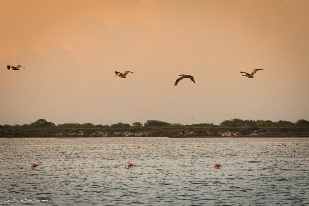 Birds in Rio Lagartos