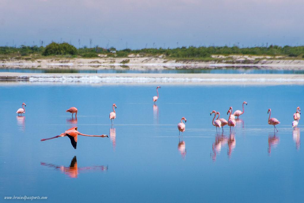 Pink Flamingoes in Las Coloradas