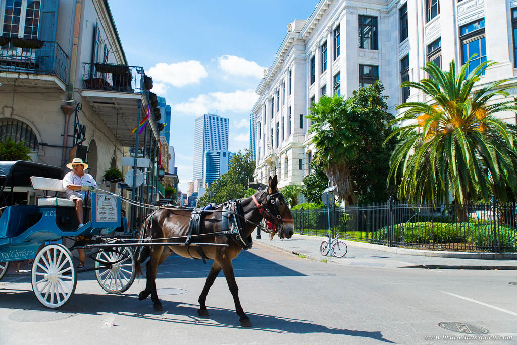 Horse drawn carriage in French Quarter of New Orleans