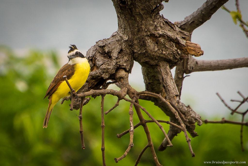 birds at Andaz Papagayo Peninsula