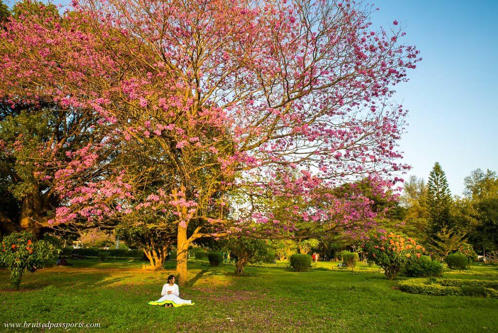 Cubbon park near Shangri La Bengaluru