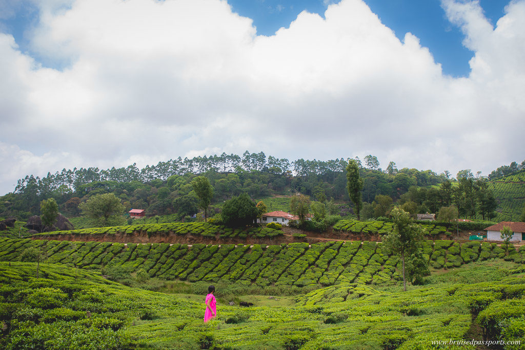 tea estates munnar kerala road trip