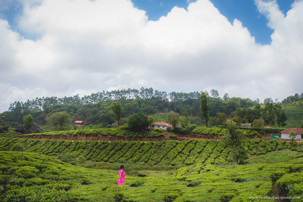 tea estates munnar kerala road trip