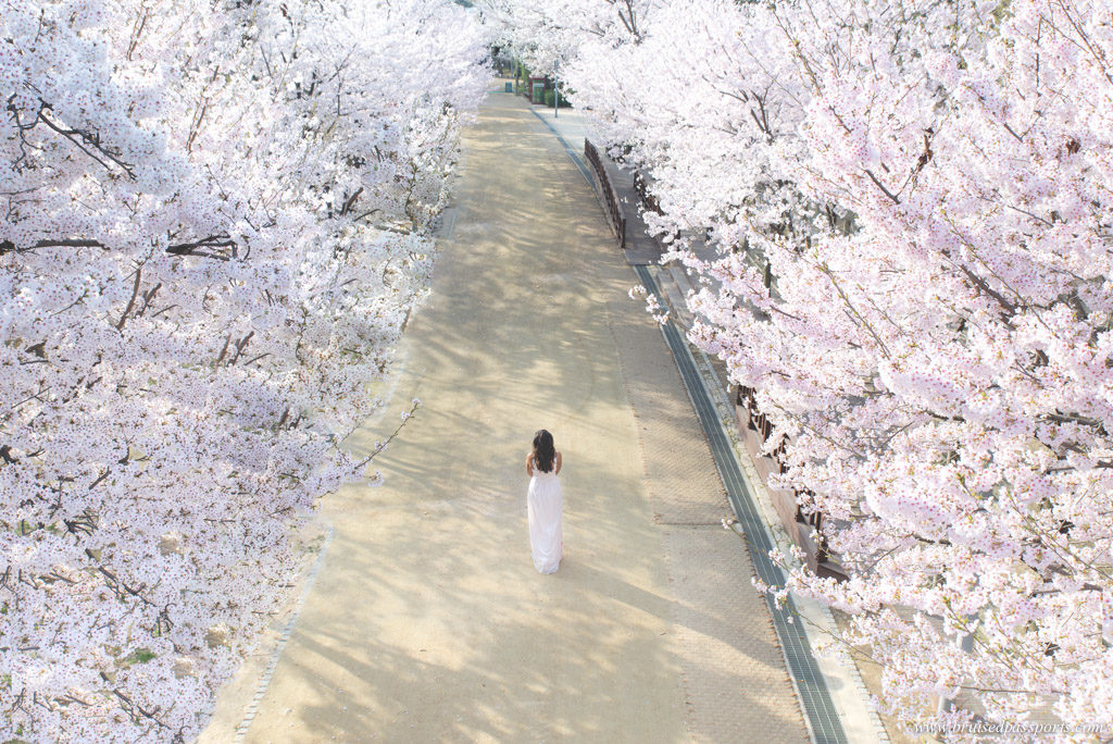Seoul forest is a great place to see cherry blossom in seoul Korea