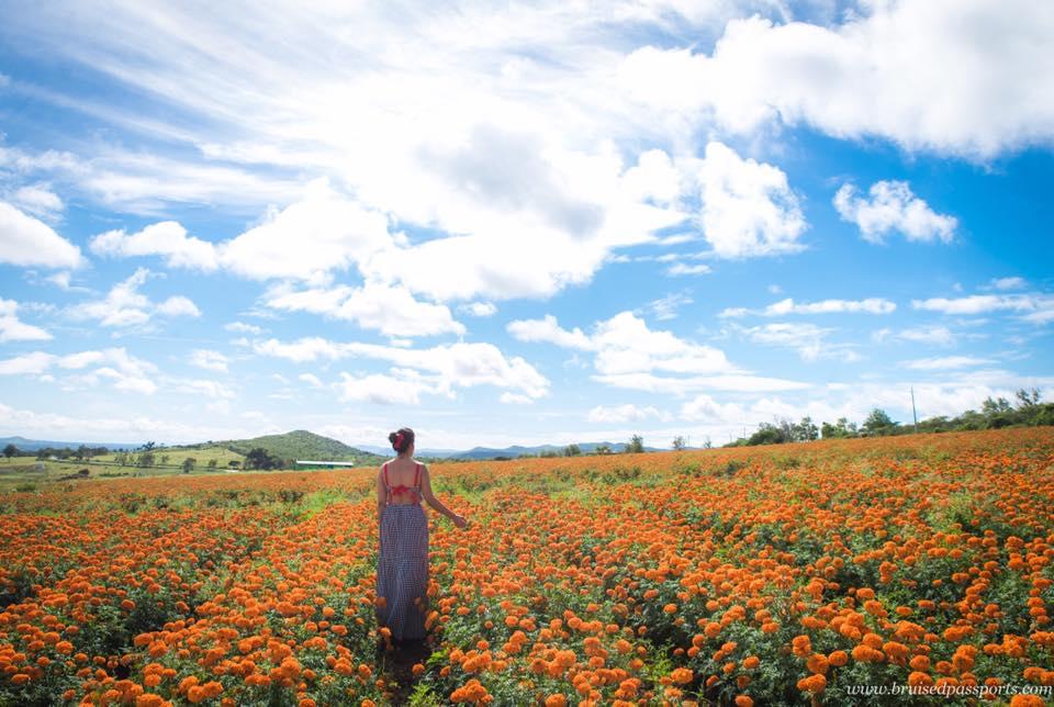 girl in sunflower marigold flower field karnataka