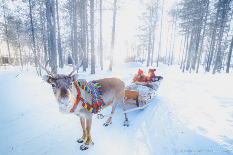 Reindeer sleigh at the Arctic Circle in Rovaniemi